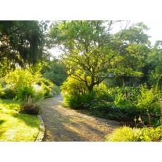 Devon - May to September