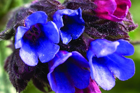 Pulmonarias Booklet Launched